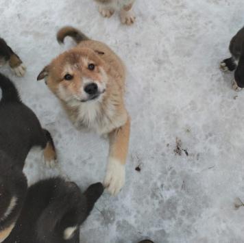 Уно - Собаки в добрые руки