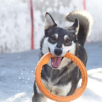 Эшби - Собаки в добрые руки