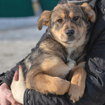 Валька - Собаки в добрые руки