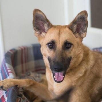 Верба - Собаки в добрые руки
