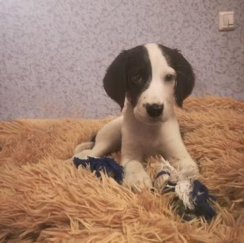 Василёк - Собаки в добрые руки
