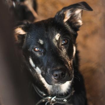 Дизель - Собаки в добрые руки