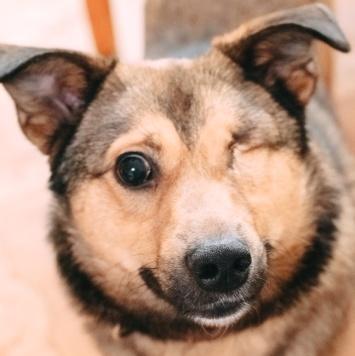 Васька - Собаки в добрые руки