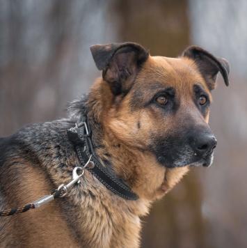 Василиса - Найденные собаки