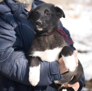 Щенки мальчики - Собаки в добрые руки