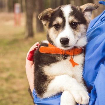 Лагуна - Собаки в добрые руки