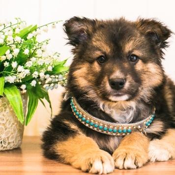 Кедр - Собаки в добрые руки