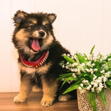 Пихта - Собаки в добрые руки