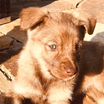 Агатик - Собаки в добрые руки