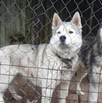 Мика - Собаки в добрые руки