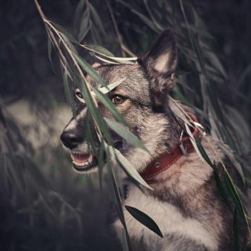 Фося - Собаки в добрые руки
