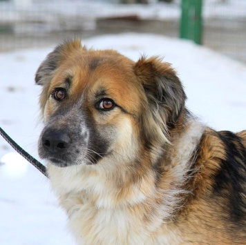 Шейлок - Собаки в добрые руки