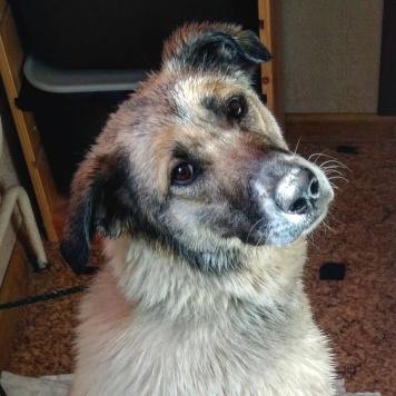 Юла - Найденные собаки