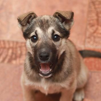 Пикси - Собаки в добрые руки