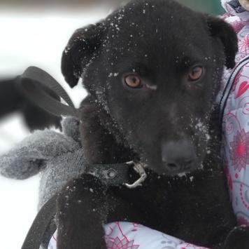 Чука - Собаки в добрые руки