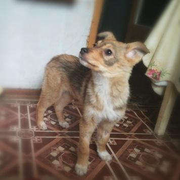 Шерли - Собаки в добрые руки
