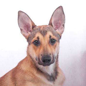 Милена - Собаки в добрые руки