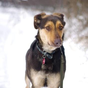 Молодая Кора - Собаки в добрые руки