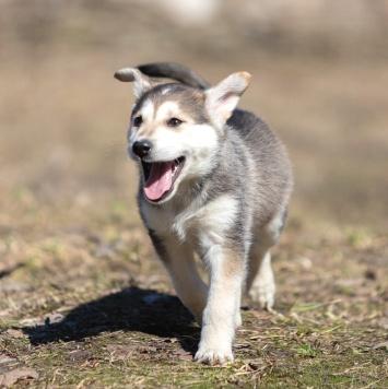 Порш - Собаки в добрые руки