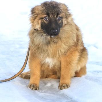 Сатти - Собаки в добрые руки