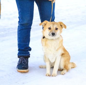Юся - Собаки в добрые руки