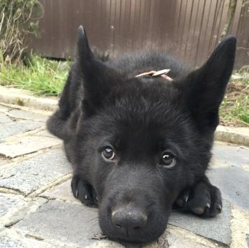 Щенок Каспер - Собаки в добрые руки