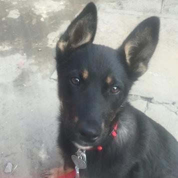 Бася - Найденные собаки