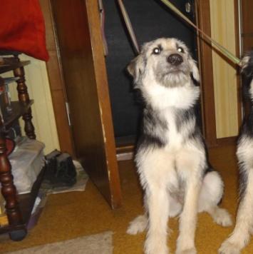 Гоша и Даша - Собаки в добрые руки