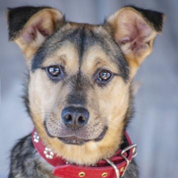 Аглая - Собаки в добрые руки