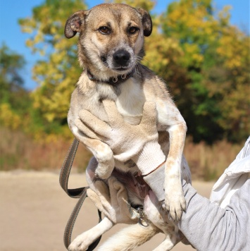 Шеба - Собаки в добрые руки