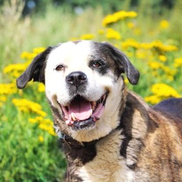 Одриана - Собаки в добрые руки