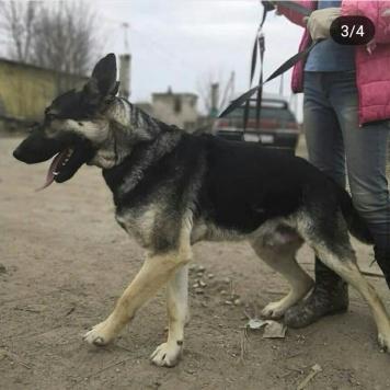 Видар - Собаки в добрые руки