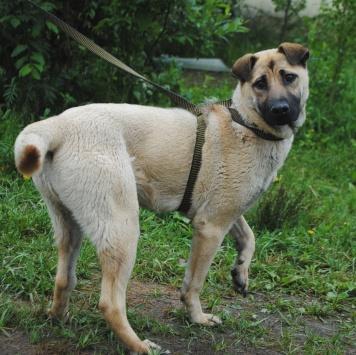 Кайли - Собаки в добрые руки