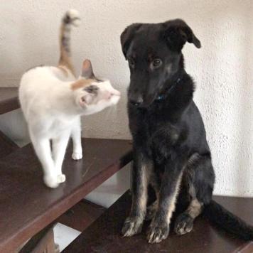 Щенок Брут - Собаки в добрые руки