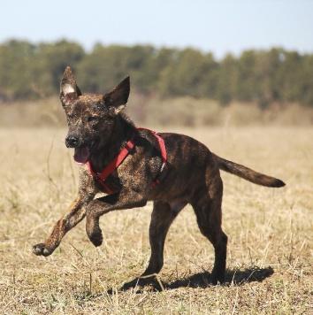 Арчи - Собаки в добрые руки
