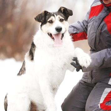 Бельбек - Собаки в добрые руки