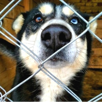 Ялта - Собаки в добрые руки