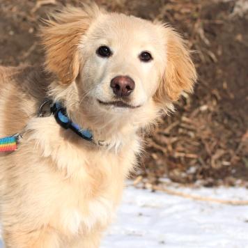 Кипр - Собаки в добрые руки