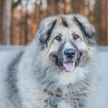 Серый - Собаки в добрые руки