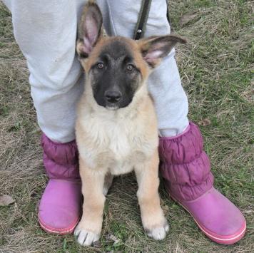 Гинза - Собаки в добрые руки