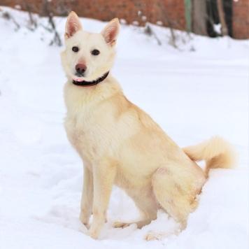 Клубничка - Собаки в добрые руки