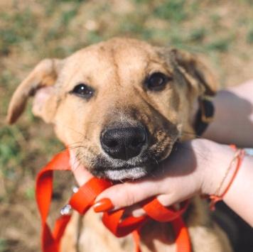 Лимончик - Собаки в добрые руки