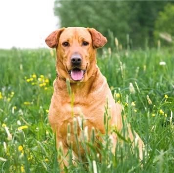 Кеннеди - Собаки в добрые руки