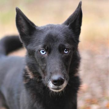 Роксана - Собаки в добрые руки