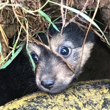 Майя - Найденные собаки