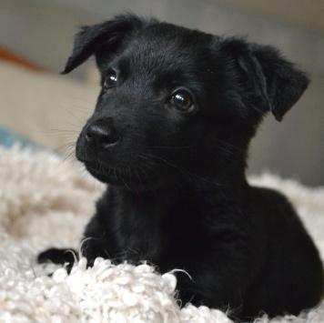 Ночка - Собаки в добрые руки