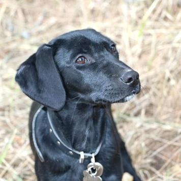 Ардис - Собаки в добрые руки