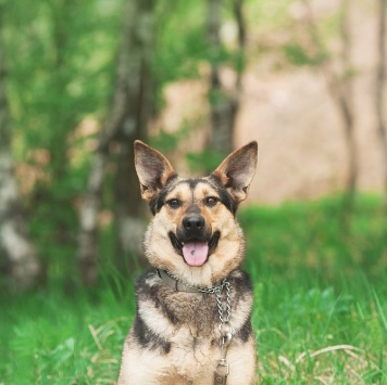 Гера - Собаки в добрые руки
