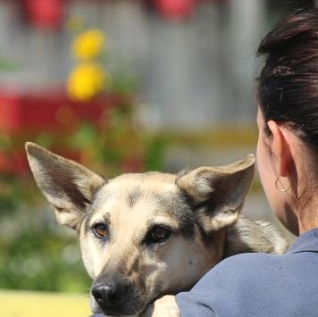 Хлоя - Собаки в добрые руки