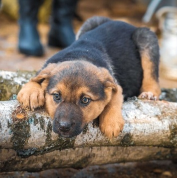 Эрли - Собаки в добрые руки